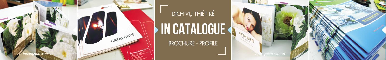 thiết kế catalogue brochure