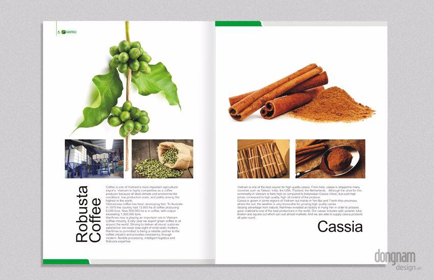 thiết kế brochure công ty Hanfimex